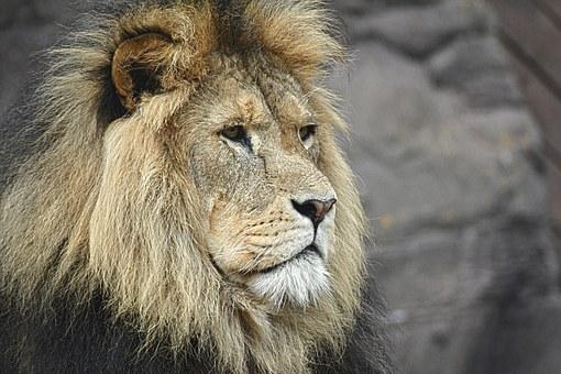 Ritratto di un Leone: Robert Redford